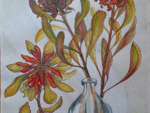 Waratah Stillife Aquarelle and Ink