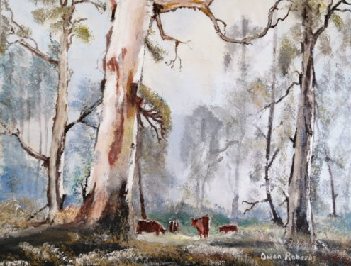 Grazing amongst the gums