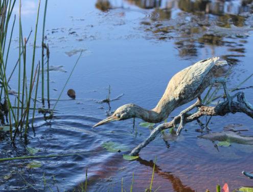 Greenback Heron -Size: H:40 x L:61 x W:30 (Life Size). Bronze. Edition of 10